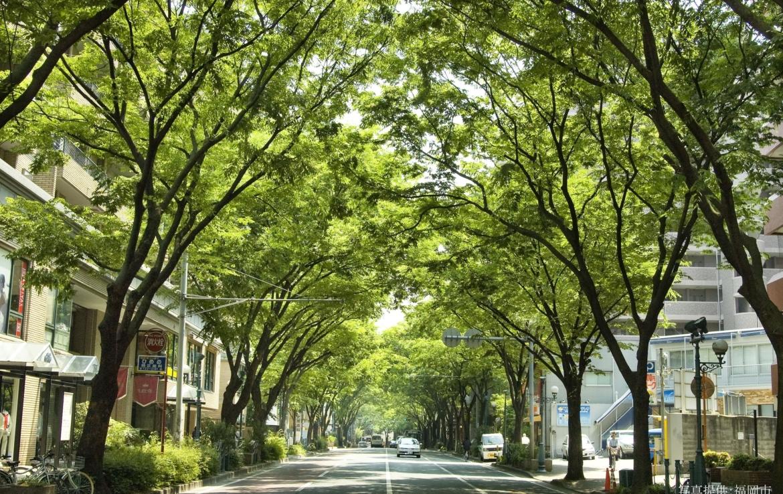 けやき通り(横)_提供福岡市