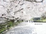 舞鶴公園20200404